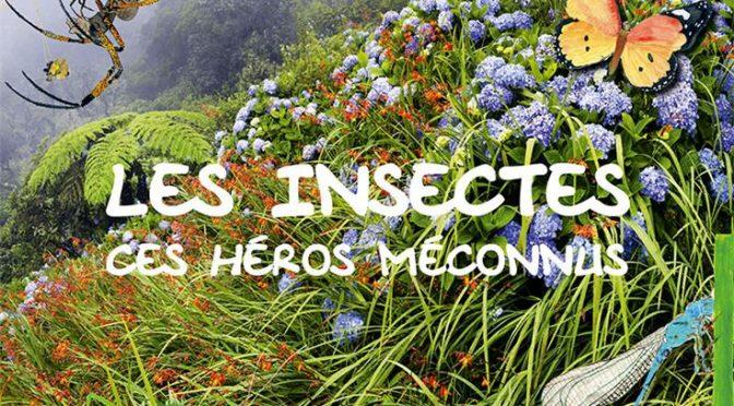 Les insectes, ces héros méconnus