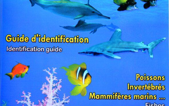 Découverte de la vie sous-marine – Océan Indien – Mer Rouge – Indian Ocean – Red Sea – Underwater Life guide