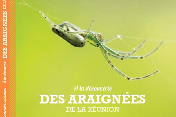 A la découverte des araignées de La Réunion