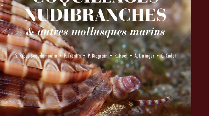 Coquillages, nudibranches et autres mollusques