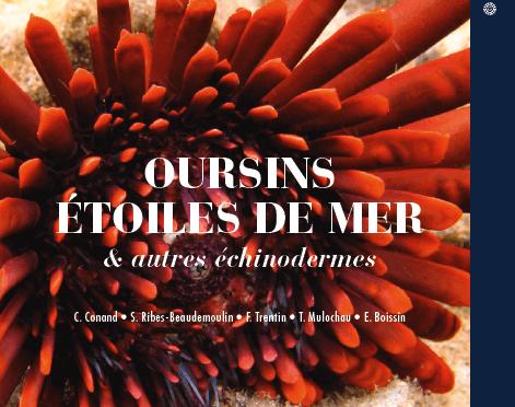 Oursins, étoiles de mer & autres échinodermes